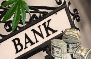 jasdeep singh, cannabis, hemp, safe act, uconn